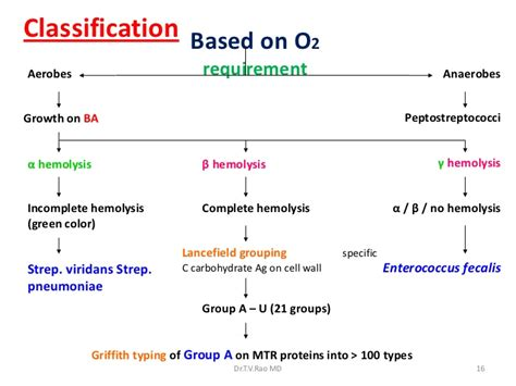 Group a streptococcus