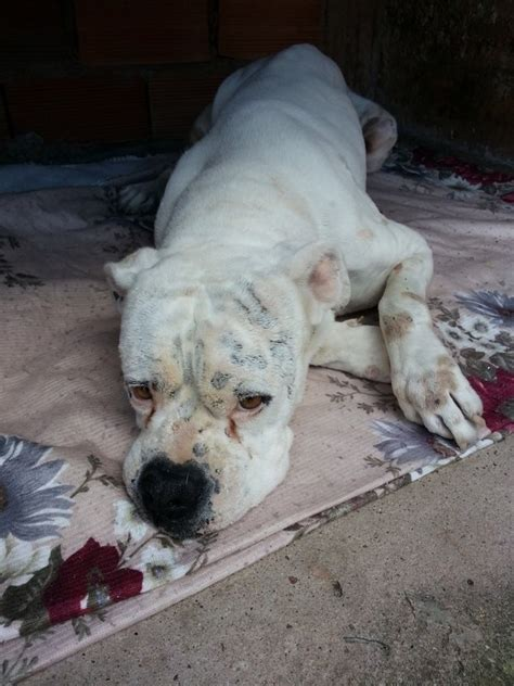 Leptospirosis Dogs Prevention and Treatment - Dogs Cats