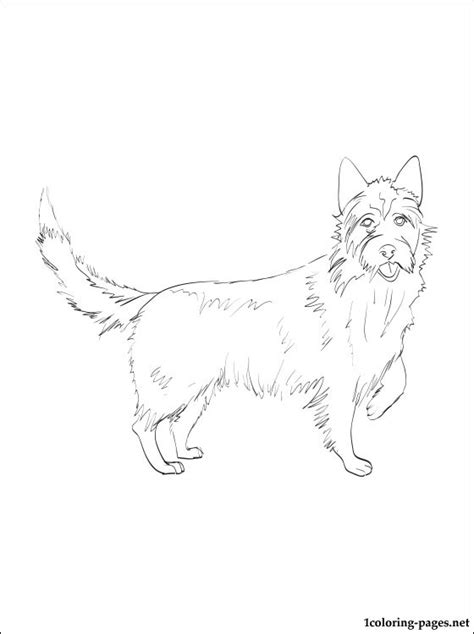 Portuguese Podengo coloring page   Coloring pages