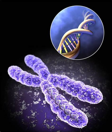 Medical Addicts: CHROMOSOMES AND ASSOCIATED DISORDERS