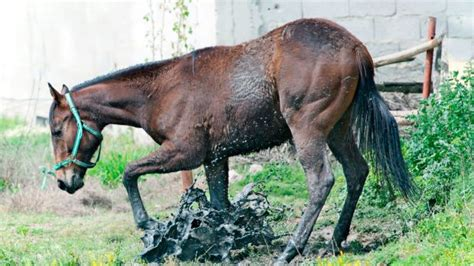 What is Equine Protozoal Myelitis? - The #1 Resource for
