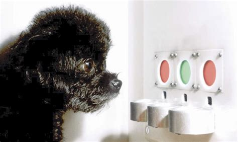How Dogs Are Helping Researchers Cure Color Blindness